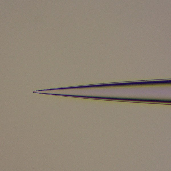 patch clamp microelectrodes; microelectrodes